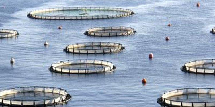 Fish Farming Tools & Equipment