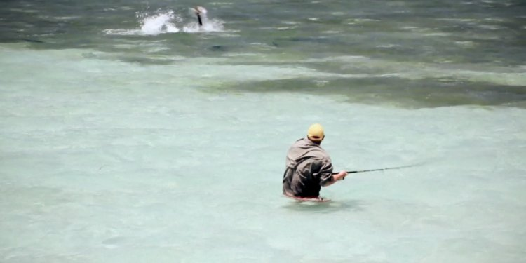 Wading for Tarpon