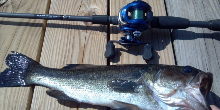 Bass fishing Rods