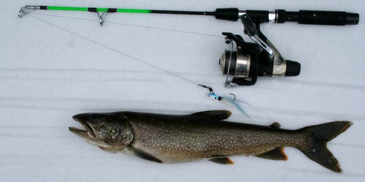 Lake trout Ice fishing Gear