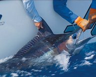 Best offshore Fishing Rods