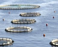 Equipment needed for fish farming
